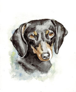 watercolor dachshund portraits
